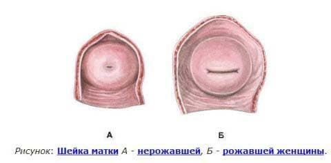 Матка после родов