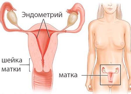 Нормальная толщина эндометрия