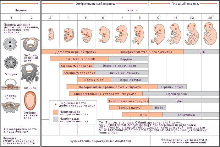 Опасные недели беременности  самые критические и опасные сроки ff23e8d4953